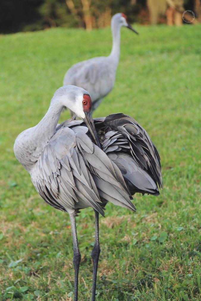 Birds(1)